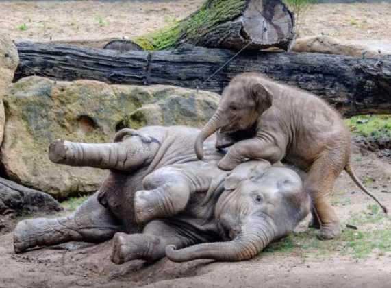 Lo zoo di Praga compie 85 anni